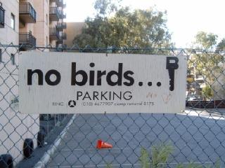 Burung Tak Bisa Membaca