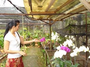 Salah satu isi perut Taman Anggrek adalah Anggrek Bulan