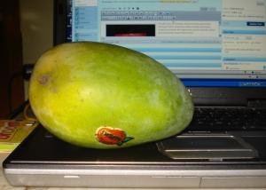 Tebal, tak berserat, manis kadang ada aroma nanas diujung lidah