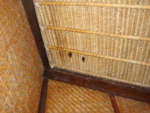Sepasang Kampret bergelantungan di teras hotel